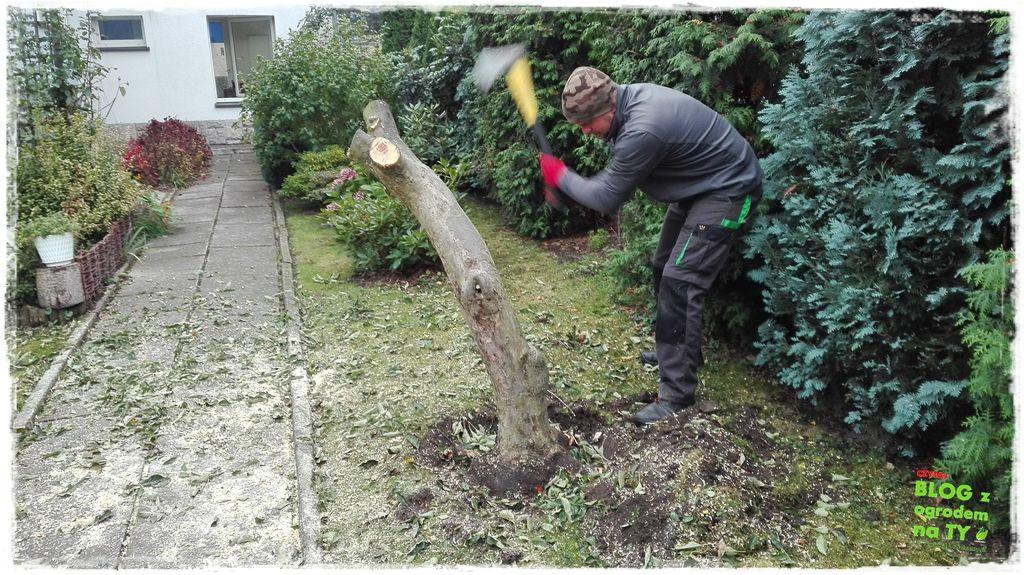 jak wyciąć drzewo zogrodemnaty12