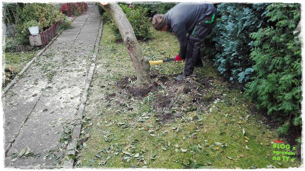 jak wyciąć drzewo zogrodemnaty13