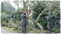 jak wyciąć drzewo zogrodemnaty4