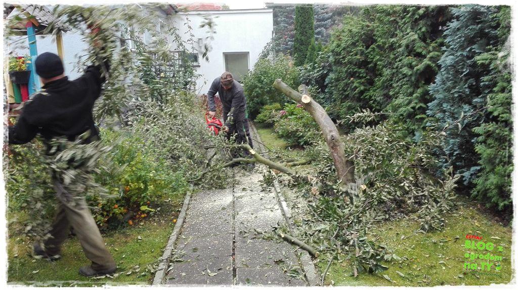 jak wyciąć drzewo zogrodemnaty6