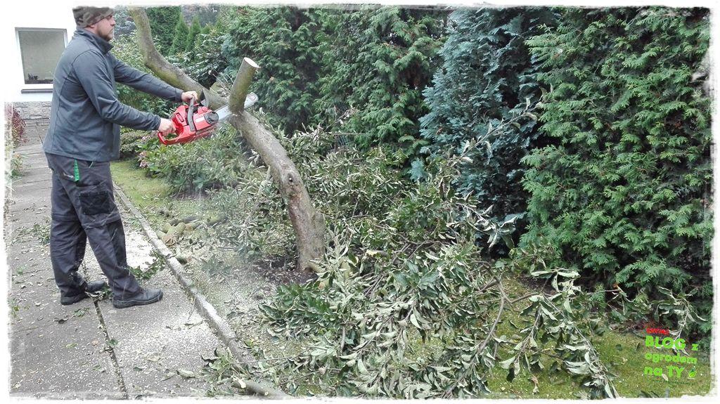 jak wyciąć drzewo zogrodemnaty5