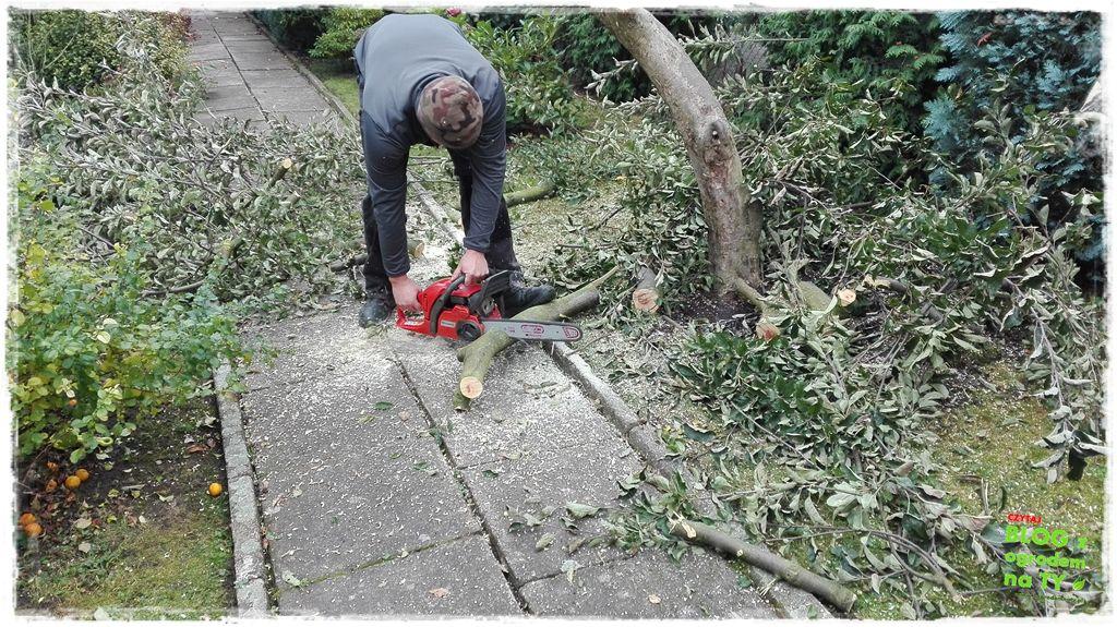 jak wyciąć drzewo zogrodemnaty8
