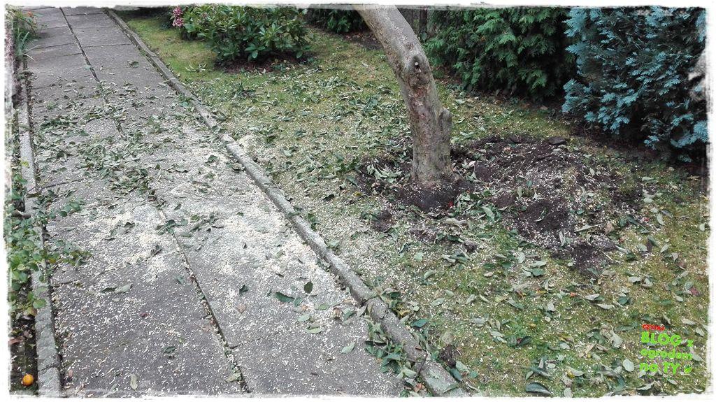 jak wyciąć drzewo zogrodemnaty11