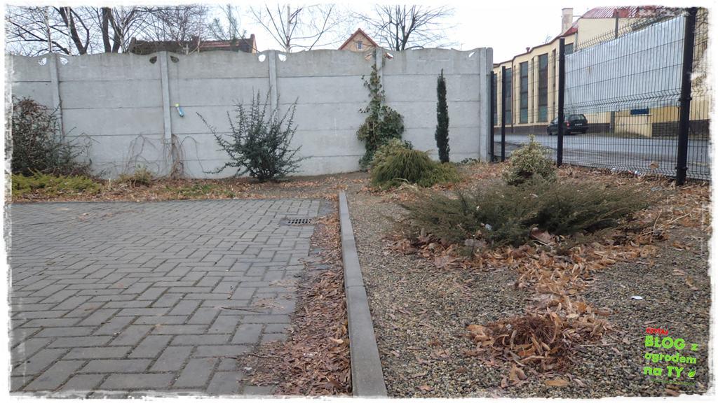 Jak przygotować ogród do zimy zogrodemnaty5
