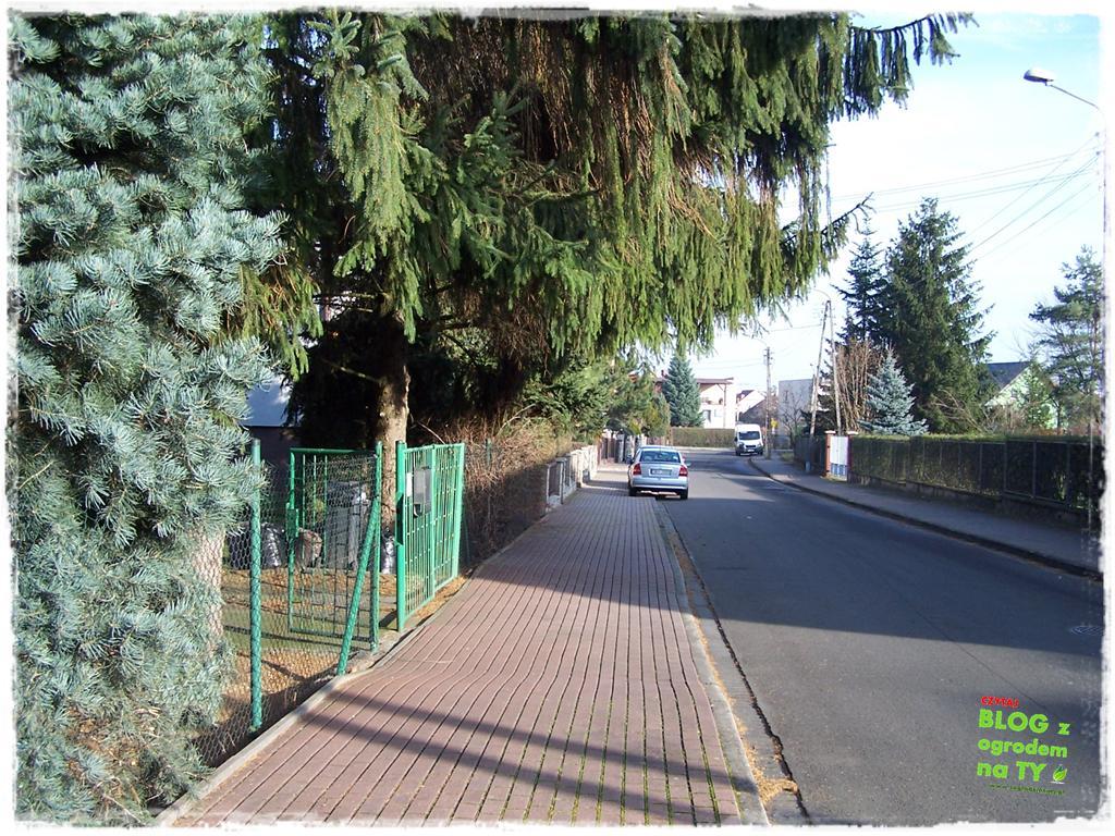 jak zmusić sąsiada do wycinki drzewa zogrodemnaty7