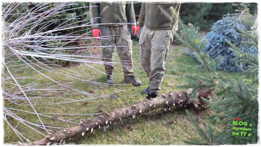 jak zmusić sąsiada do wycinki drzewa zogrodemnaty8