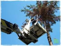 jak zmusić sąsiada do wycinki drzewa zogrodemnaty1