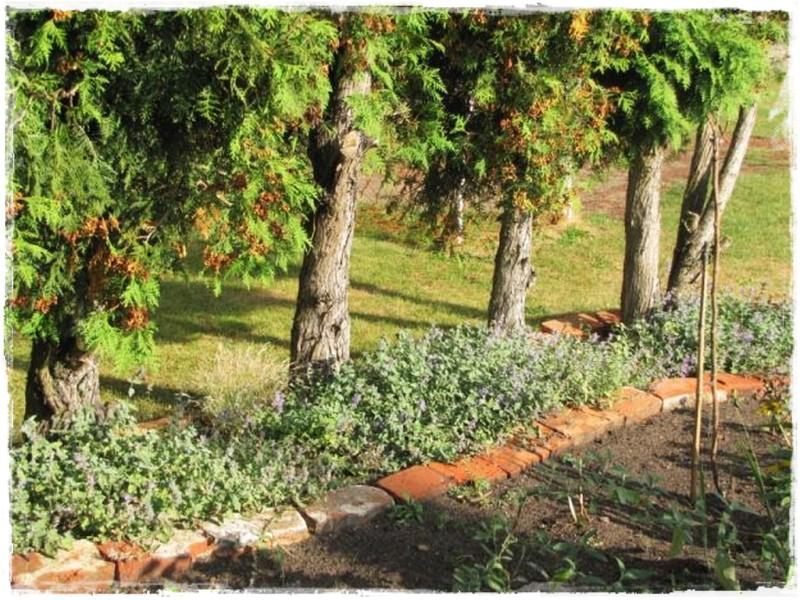 zioła w ogrodzie zogrodemnaty6