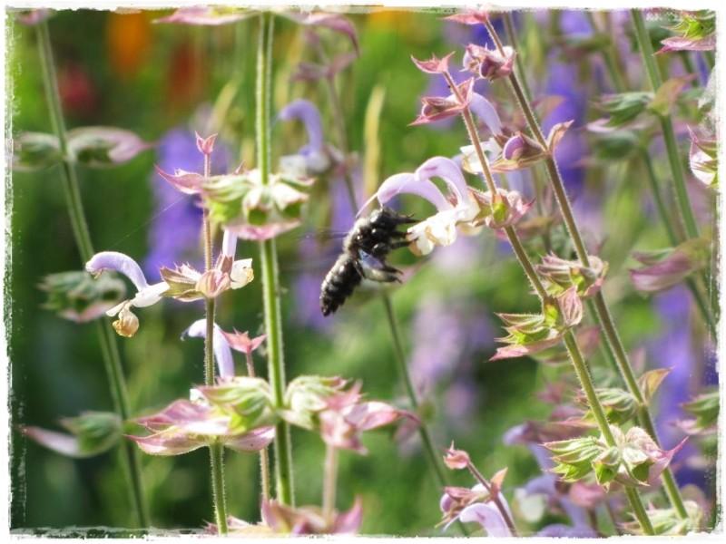 zioła w ogrodzie zogrodemnaty9
