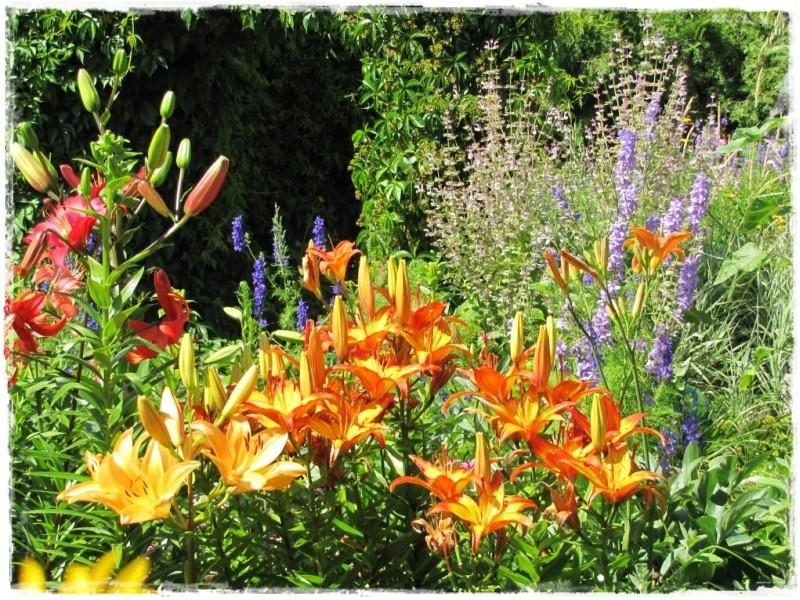 zioła w ogrodzie zogrodemnaty14