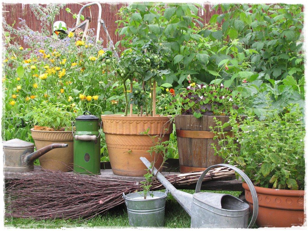 zioła w ogrodzie zogrodemnaty20