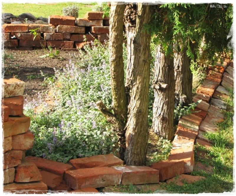 zioła w ogrodzie zogrodemnaty7