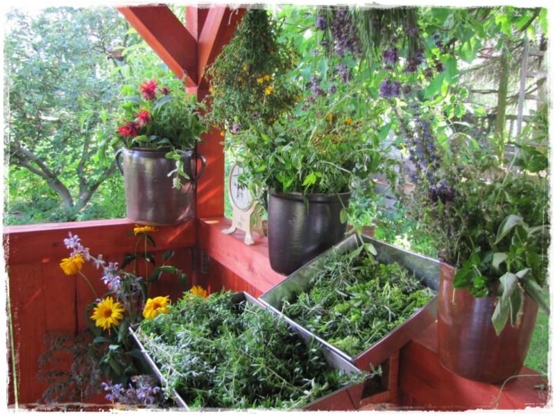 zioła w ogrodzie zogrodemnaty10