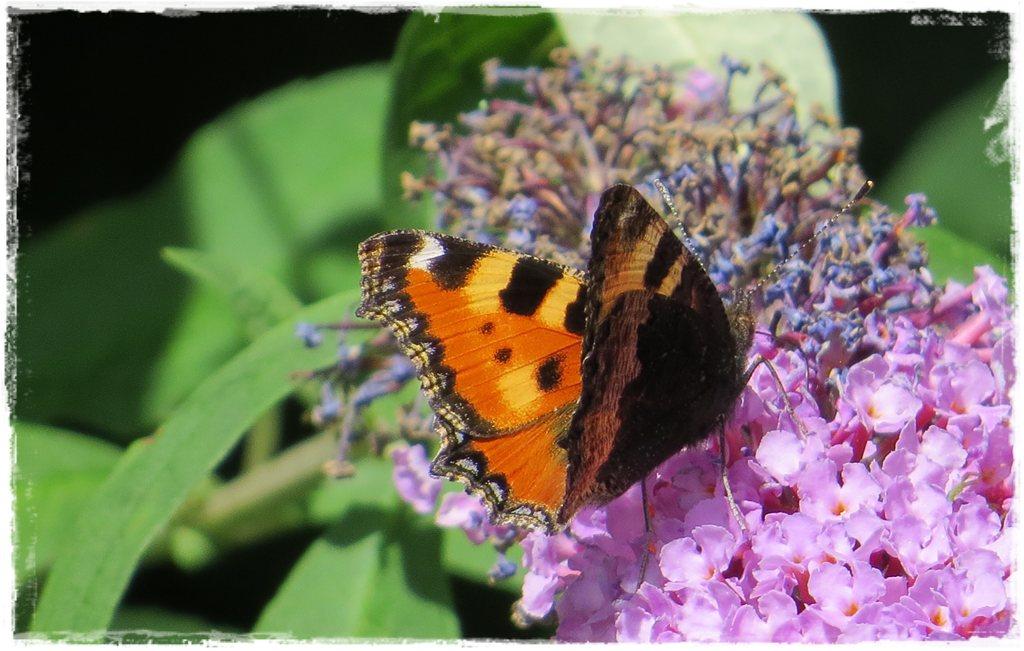 motyle w ogrodzie zogrodemnaty2