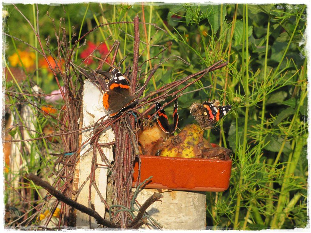 motyle w ogrodzie zogrodemnaty27