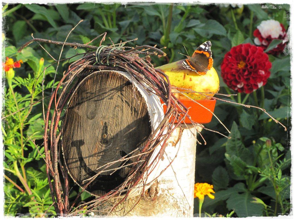 motyle w ogrodzie zogrodemnaty28