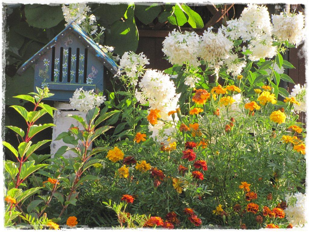 motyle w ogrodzie zogrodemnaty29