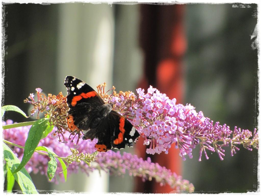 motyle w ogrodzie zogrodemnaty3