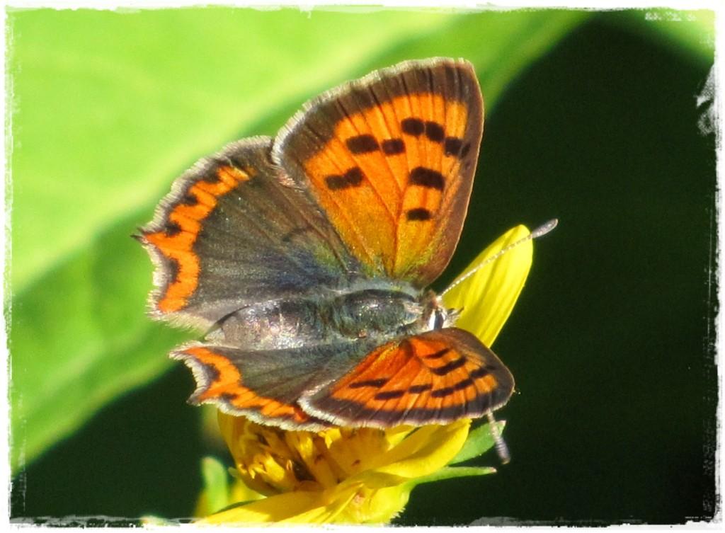 motyle w ogrodzie zogrodemnaty30