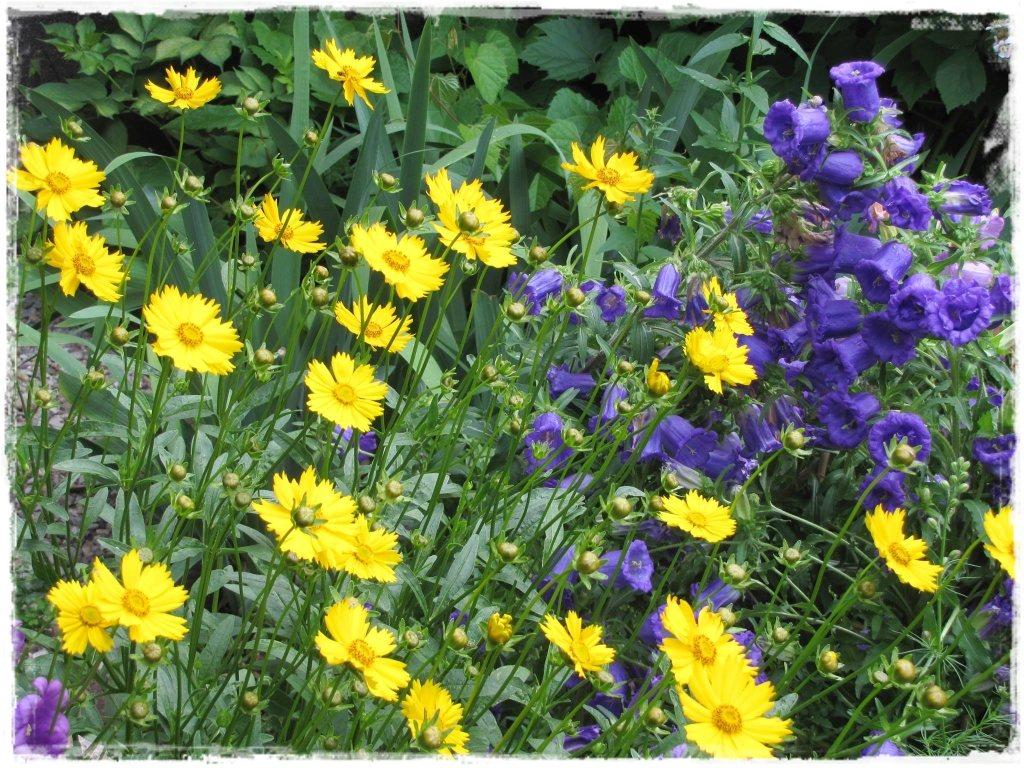 motyle w ogrodzie zogrodemnaty36