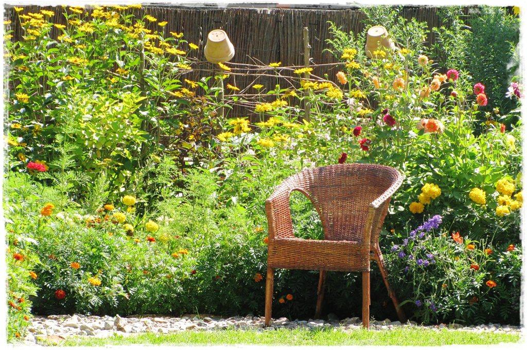motyle w ogrodzie zogrodemnaty37