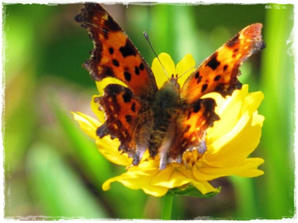 motyle w ogrodzie zogrodemnaty5