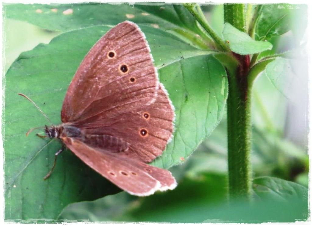 motyle w ogrodzie zogrodemnaty8