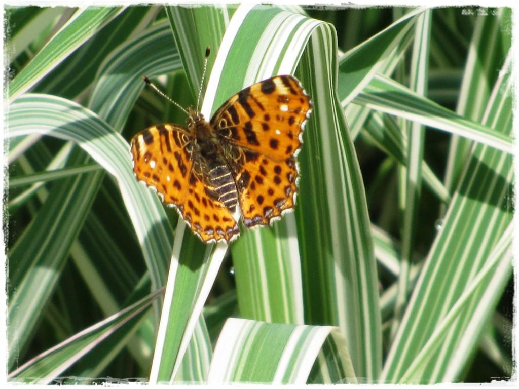motyle w ogrodzie zogrodemnaty9