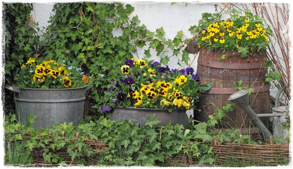 starocie w ogrodzie zogrodemnaty10