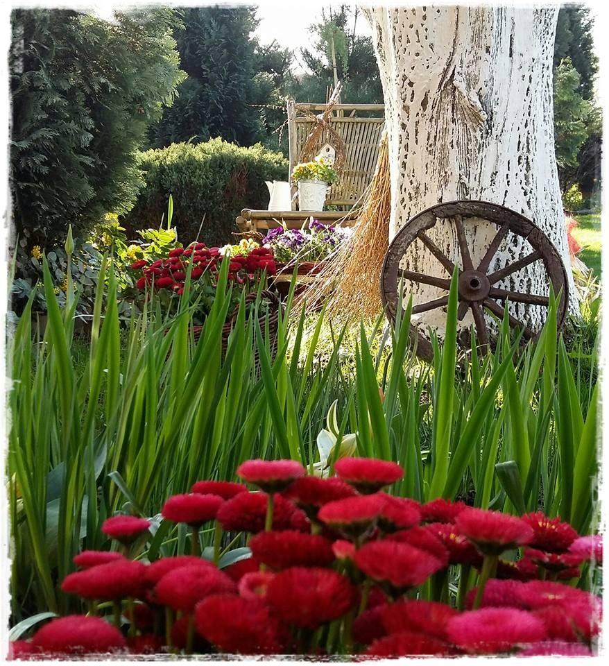 starocie w ogrodzie zogrodemnaty25