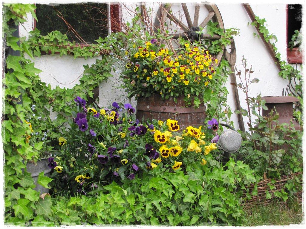 starocie w ogrodzie zogrodemnaty30