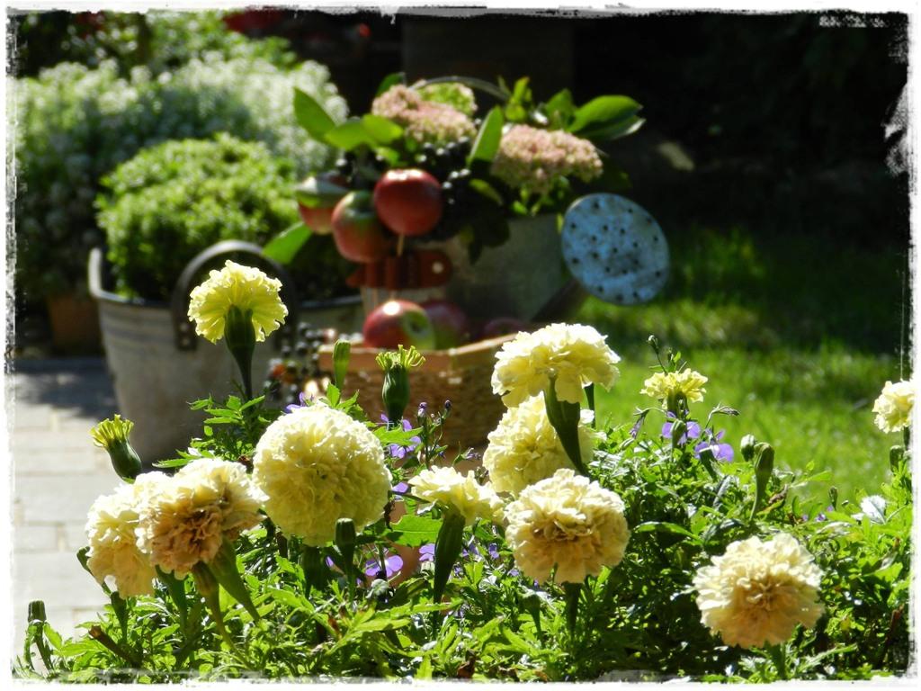 starocie w ogrodzie zogrodemnaty6