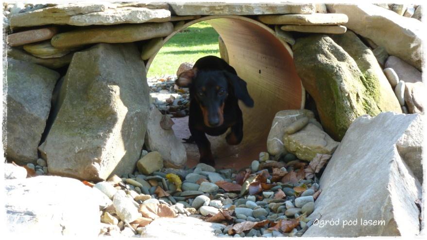 Ogrodowy tunel do zabawy dla psa zogrodemnaty3