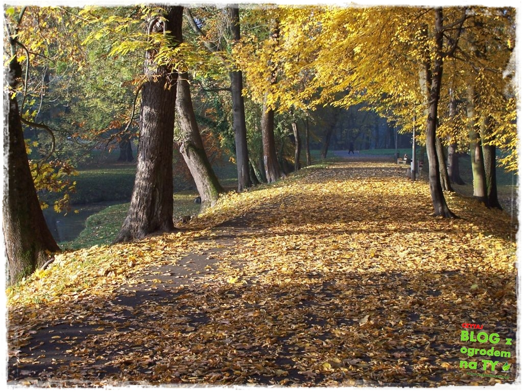 jesien_zogrodemnaty18