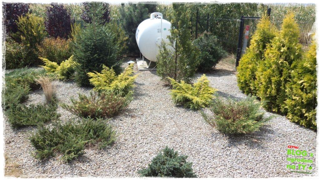 założenie ogrodu zogrodemnaty4