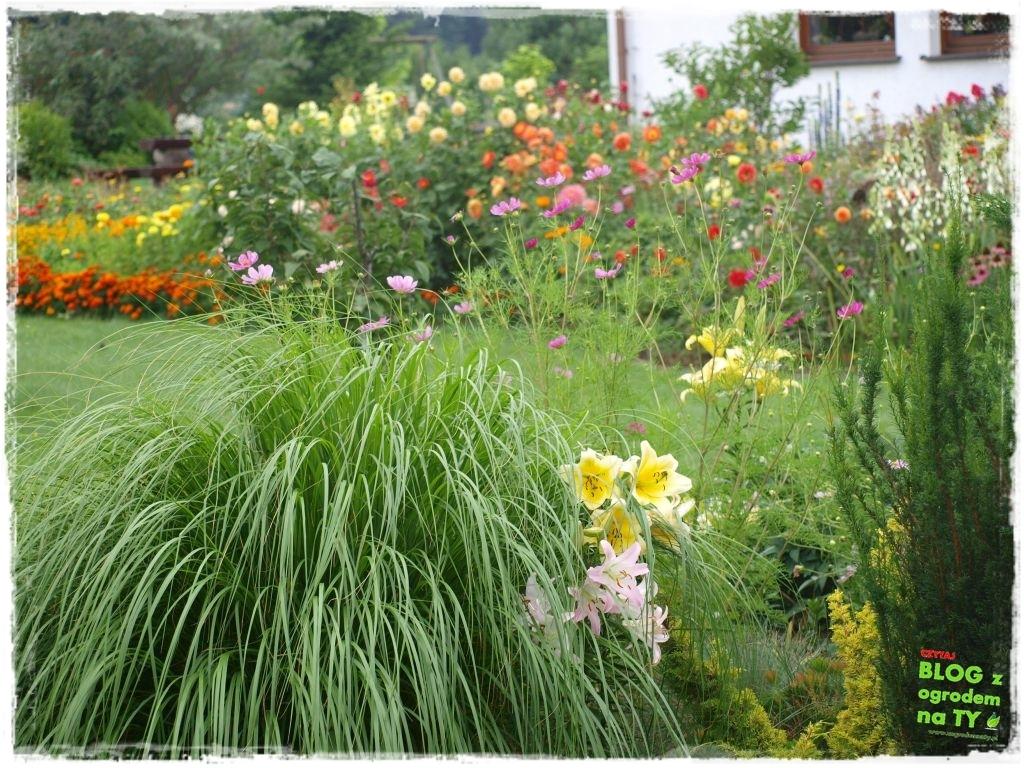 założenie ogrodu zogrodemnaty22
