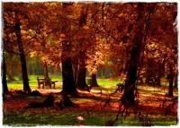 Park Miejski w Nysie zogrodemnaty1