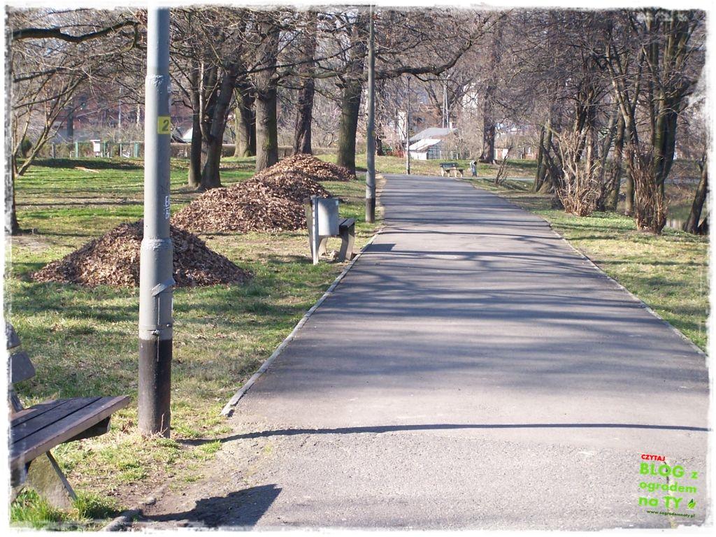 Park Miejski w Nysie zogrodemnaty16