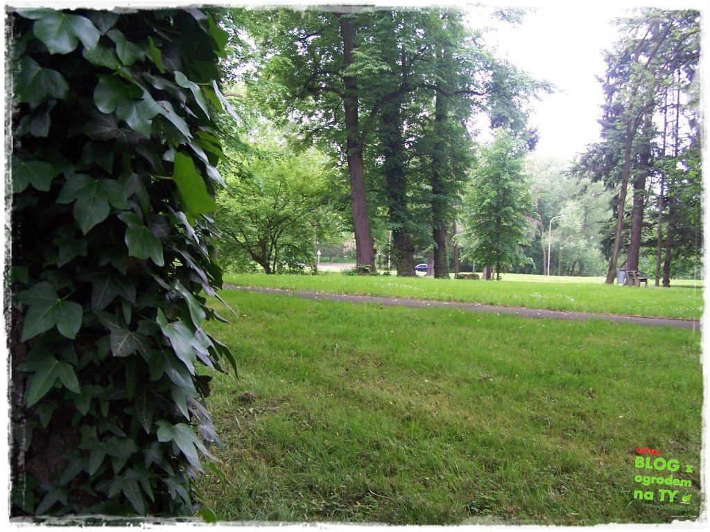 Park Miejski w Nysie zogrodemnaty32