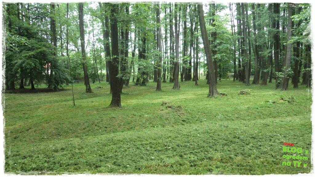 Park Miejski w Nysie zogrodemnaty38