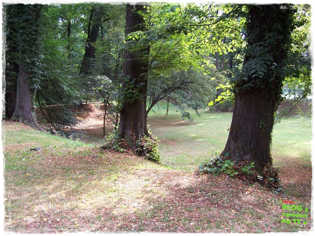 Park Miejski w Nysie zogrodemnaty44