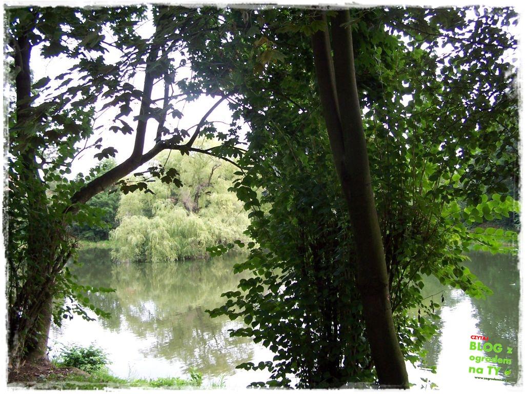 Park Miejski w Nysie zogrodemnaty47