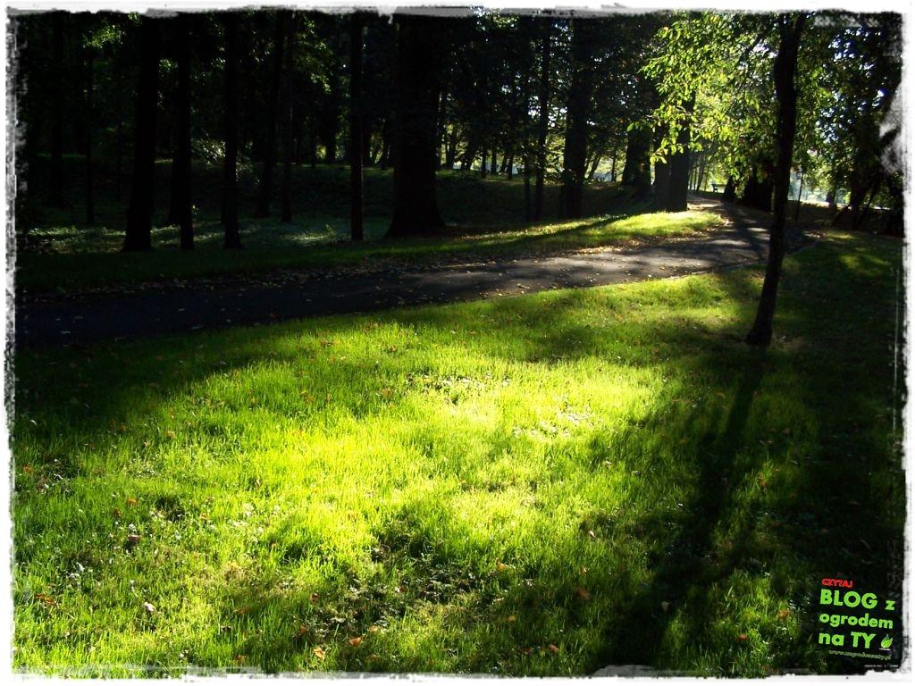 Park Miejski w Nysie zogrodemnaty50