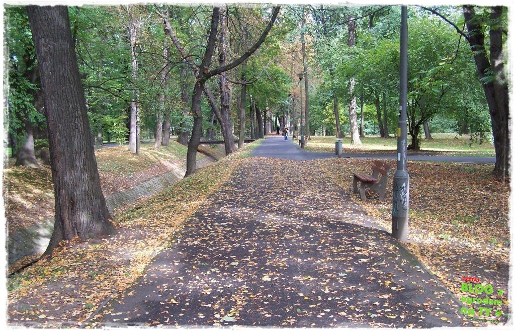 Park Miejski w Nysie zogrodemnaty51