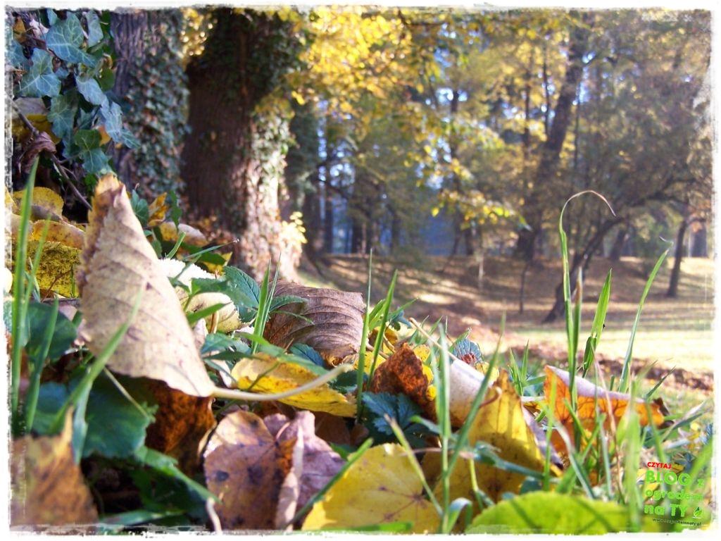 Park Miejski w Nysie zogrodemnaty56