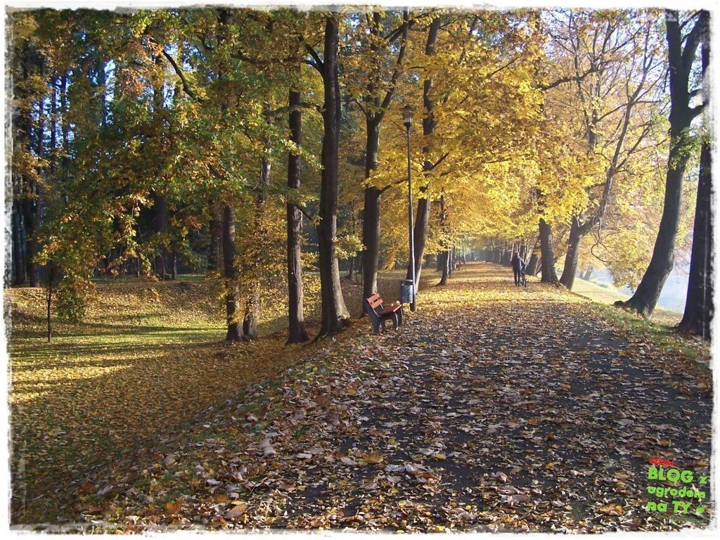 Park Miejski w Nysie zogrodemnaty60