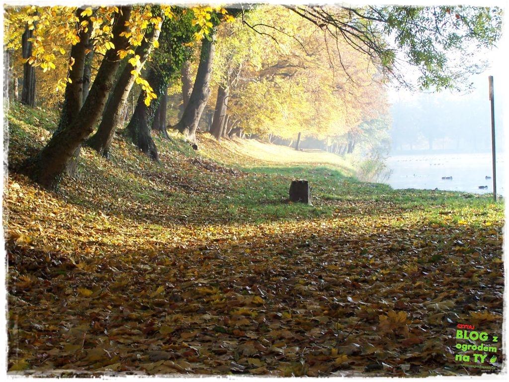 Park Miejski w Nysie zogrodemnaty62