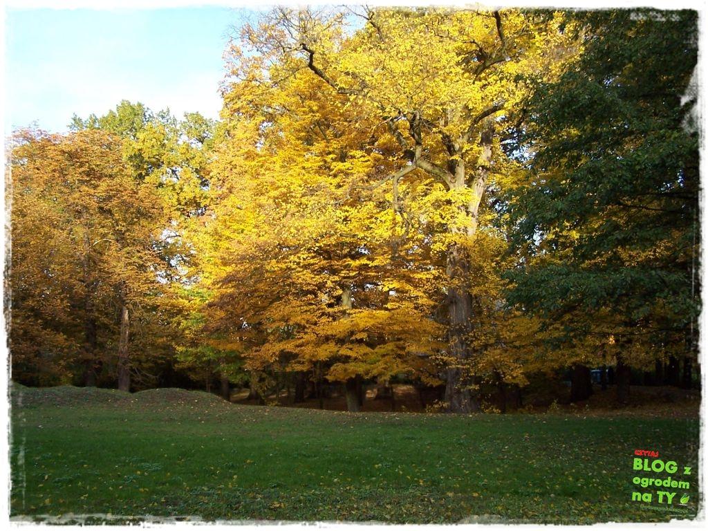Park Miejski w Nysie zogrodemnaty65