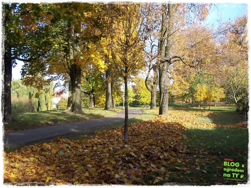 Park Miejski w Nysie zogrodemnaty66