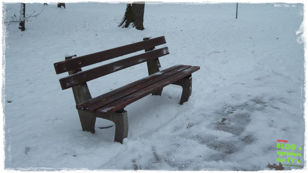 Park Miejski w Nysie zogrodemnaty7